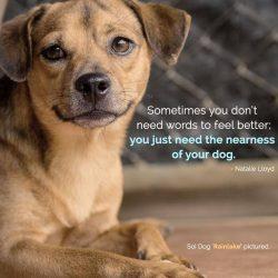 Soi Dog Foundation 2