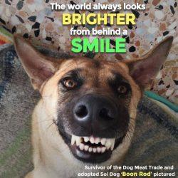 Soi Dog Foundation 4