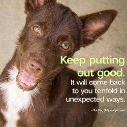 Soi Dog Foundation 7