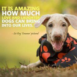 Soi Dog Foundation 8